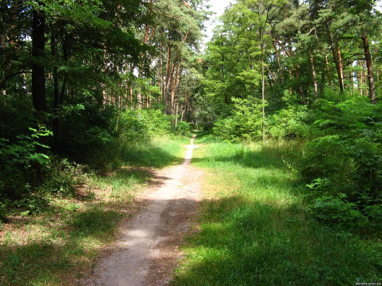 Прохожую в лесу 2 фотография